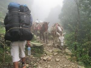 trekking-300x225